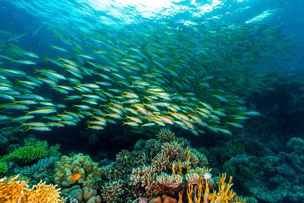 澳洲發現500米「刀片狀」巨型珊瑚礁 跟台北101一樣高 | ETtod
