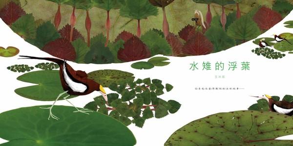 繪本《水雉的浮葉》11/15開賣!蓋高鐵「找復育園區」過程全記錄 | E
