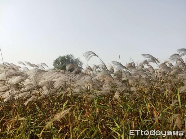 發現新山東/打造候鳥「國際機場」 復育黃河口濕地變天堂 | ETtoda