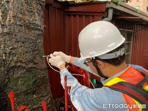 新北推護樹教育課程 為樹木健康把關 | ETtoday地方新聞 | ET