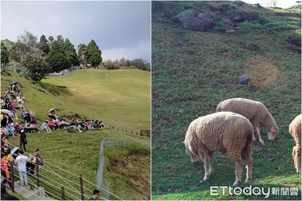 終止綿羊秀連署達標 何志偉:若清境農場虐待動物我肯定砍預算 | ETto