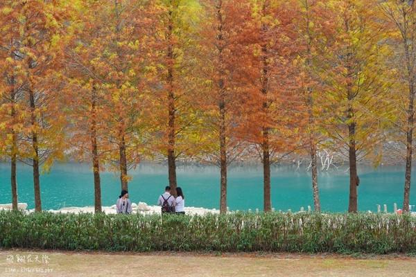 秋日限定湖水藍+金黃美景!日月潭湖畔落羽松轉色超浪漫   ETtoday