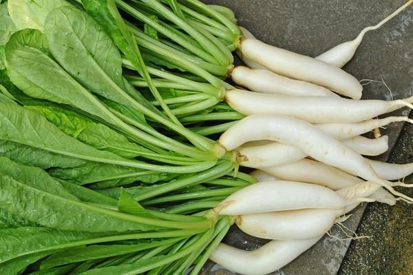 白蘿蔔「熱量極低」整株都可吃 還含大量維生素挑選3秘訣曝 | ETtod