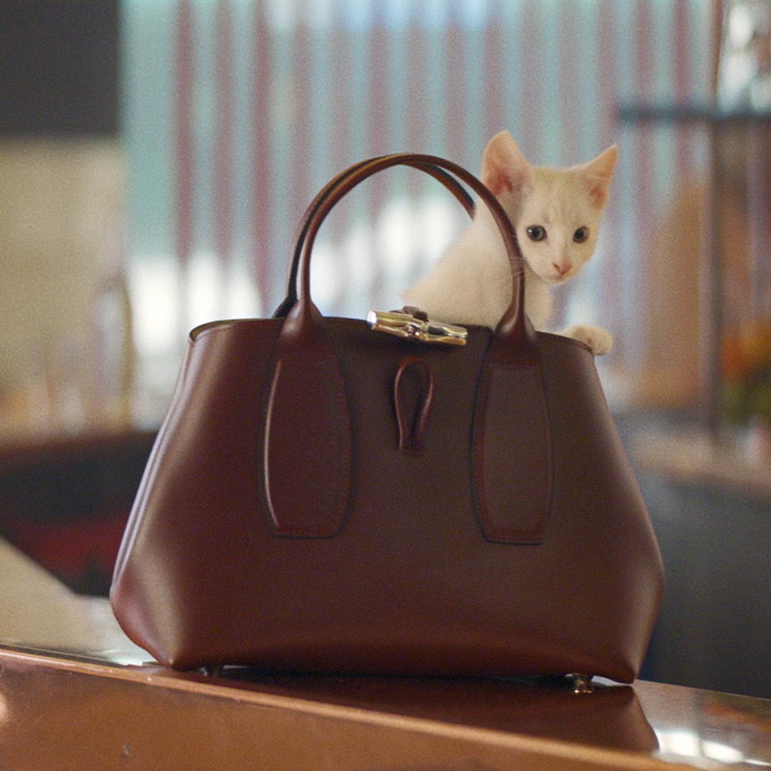 "Melody热爱小废包中最实用是""这一颗""新广告中甚至还能装猫咪?"