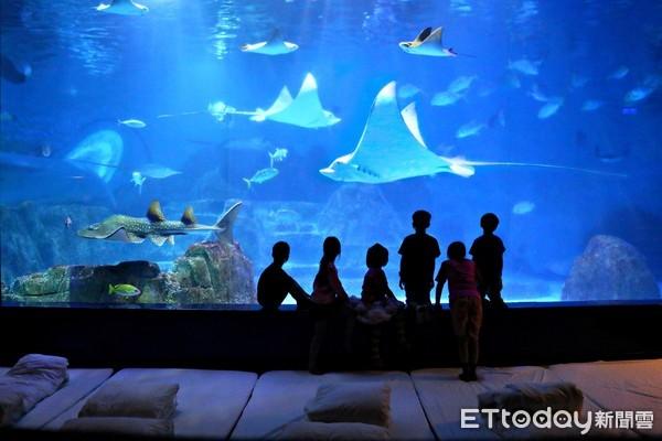 花蓮海洋公園新春限定夜宿!吃喝玩樂全包 還能與海豚海獅一起睡 | ETt