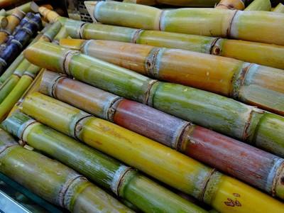 錢世傑/為能「倒吃甘蔗」 斜槓是「甘蔗世代」唯一出路!
