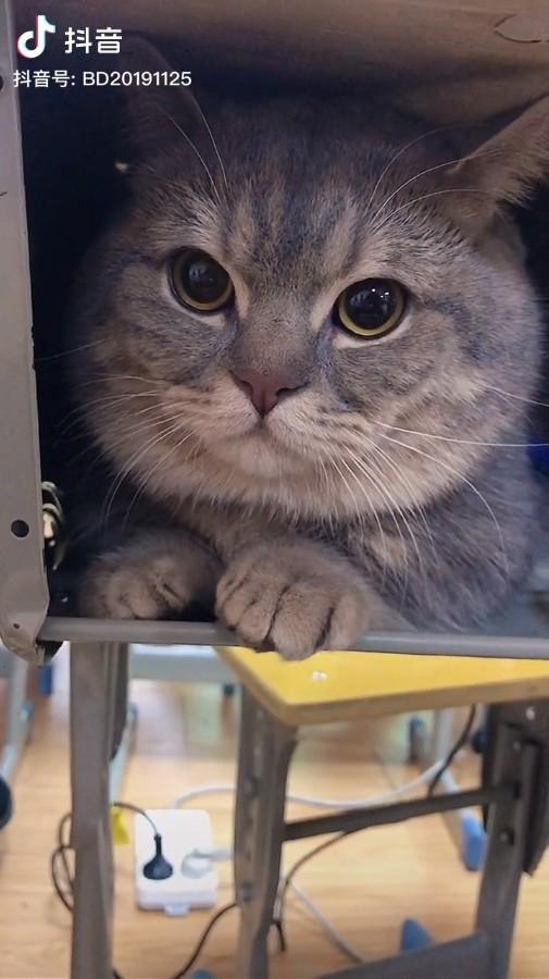 ▲▼中國學生偷帶貓上課藏在抽屜(圖/翻攝自抖音/@BD20191125)