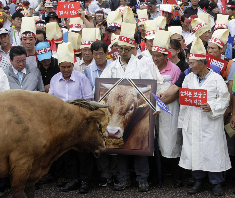 ▲▼時任南韓總統李明博2008年全面開放美牛進口,民眾擔憂狂牛症入侵。(圖/達志影像/美聯社)
