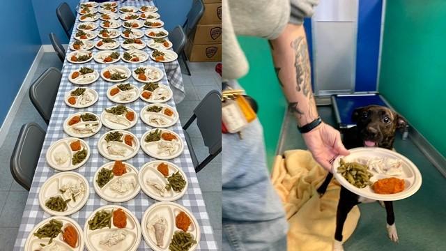 ▲▼美國有對夫妻特準備感恩節大餐,餵食收容所裡的80隻狗狗。(圖/翻攝自Facebook/Hillary Snogles-Dunn)
