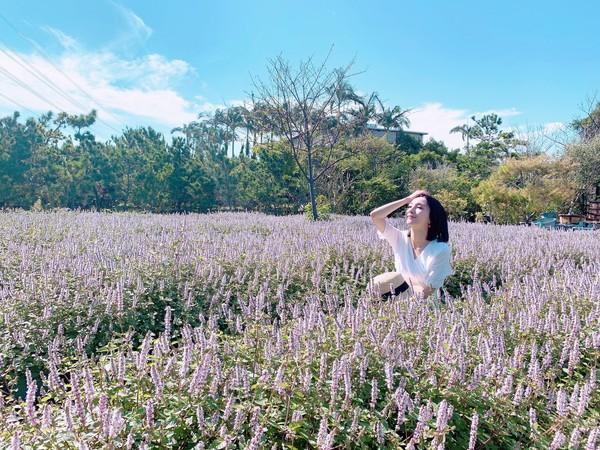 免人擠人!楊梅私人庭園有紫爆仙草花 50元入園送仙草茶、小禮物 | ET