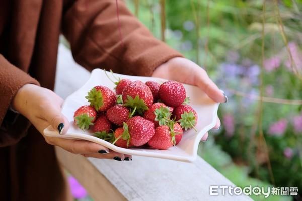內湖「20家草莓園」開放採果!公車30元無限搭 順遊吊橋、同心池 | E