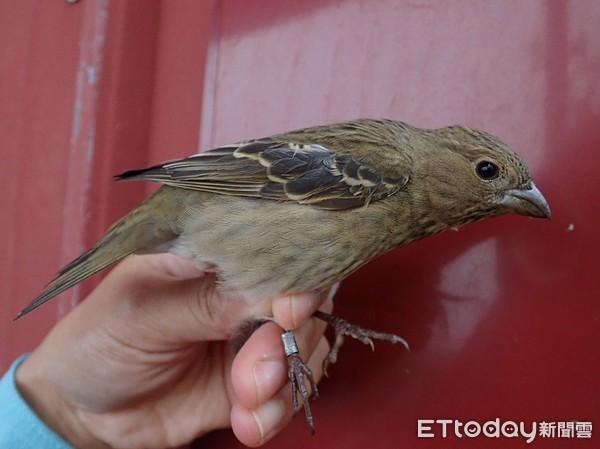 鳥類繫放研究斬獲重大成果! 太魯閣國家公園發現罕見稀有鳥類 | ETto