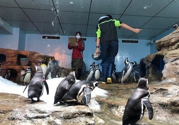 桃園限定!可愛企鵝號誌燈進駐...Xpark按真實動作剪影成6動畫 |