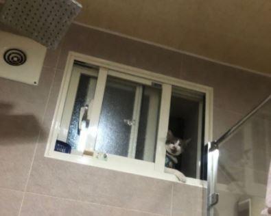 [新聞] 洗澡被偷窺!她崩潰公開「現行犯」照片.
