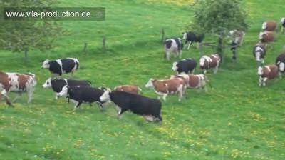 告別農舍!踏上自由草地的牛讓我哭了