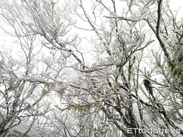 今清晨僅0度!直擊宜蘭太平山結滿霧淞 山莊周邊銀白世界最夢幻