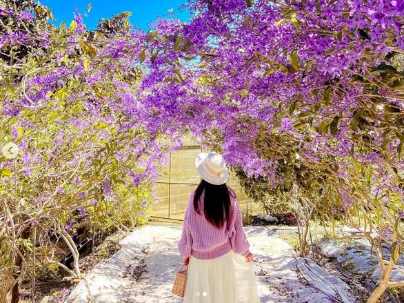 紫爆了!南投隱藏版「紫色花海隧道」免費開放 錫葉藤滿開超夢幻