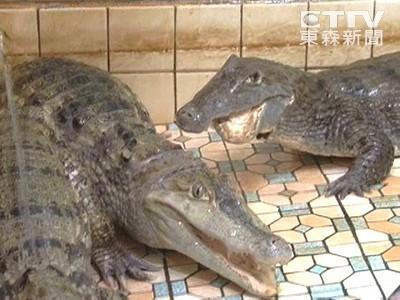 800多年前,人類眼中的鱷魚長這樣
