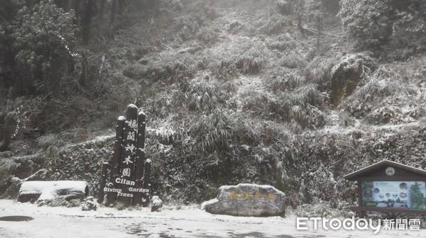 免塞車賞雪!宜蘭棲蘭神木園積雪10cm 明池落羽松飄點點雪花超夢幻 |