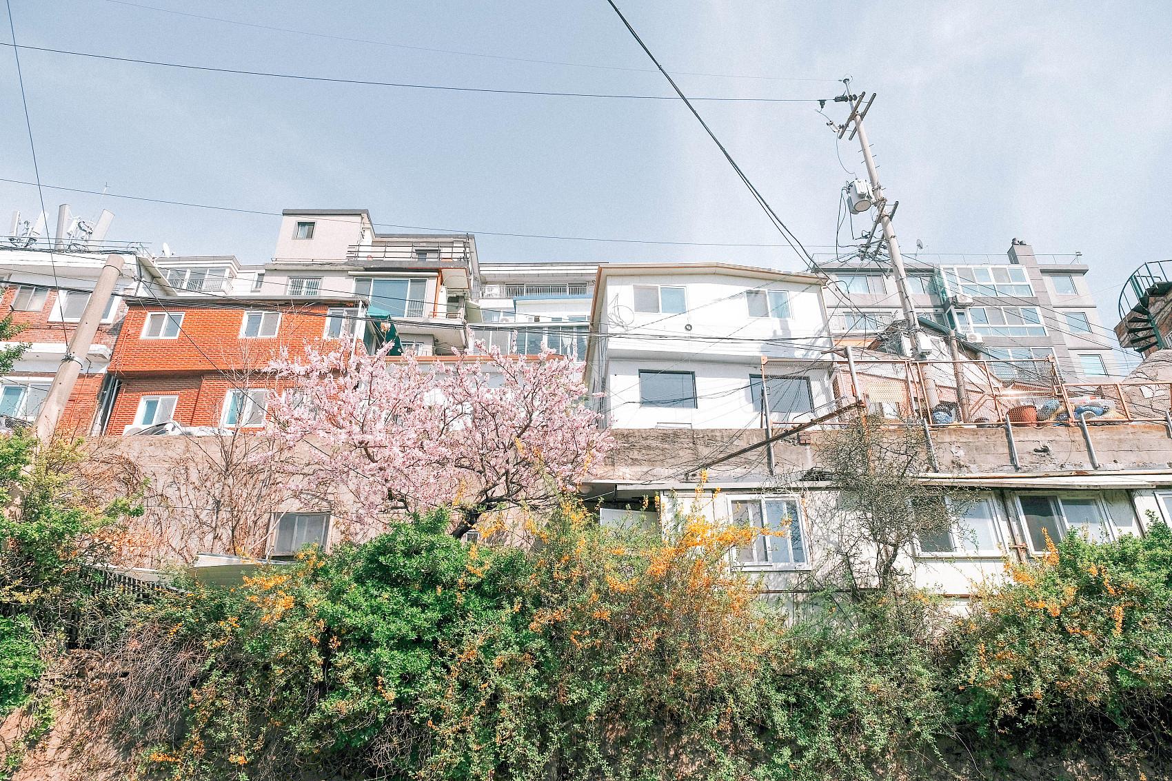 ▲▼首爾市龍山區梨泰院有許多外國人、環境靜謐,集中許多豪宅。(圖/CFP)