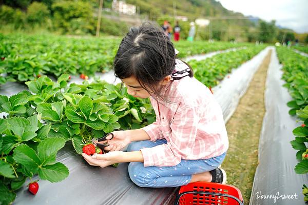 出發採草莓了!苗栗隱藏版高架草莓園 價格合理、熟果大顆又多汁   ETt