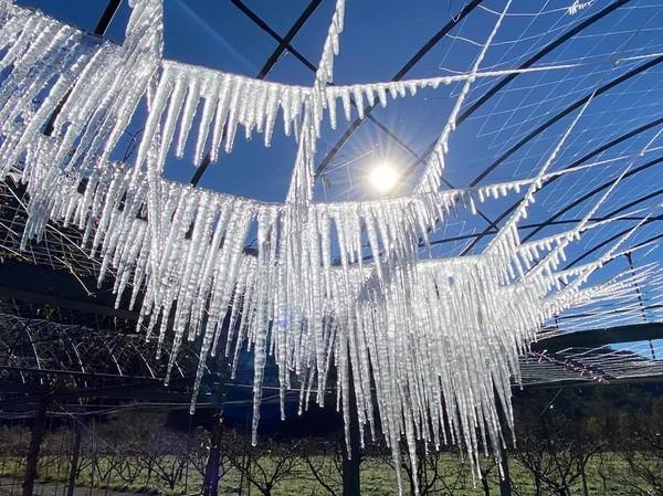 武陵農場「水晶簾冰柱」再現!零下3.9度限定奇景 閃閃發亮超夢幻 | E