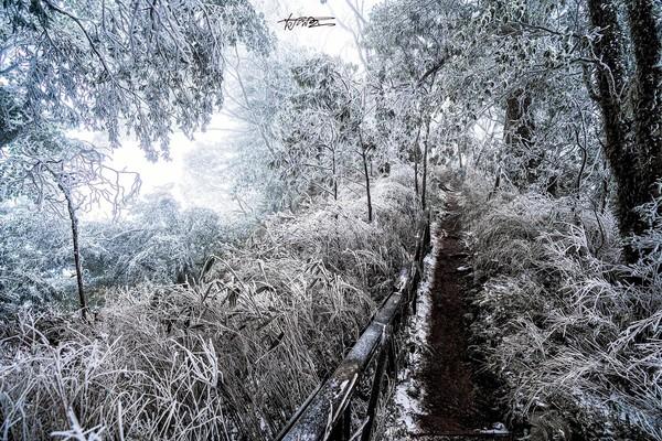 賞雪秘境快收藏!新竹魯壁山白雪步道 紛飛雪花+浪漫雲霧美到翻