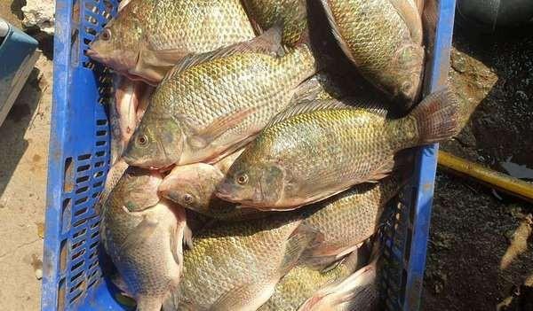 寒流強襲!桃園水池「免費送魚」 限自帶魚網撈...零錢捐公益 | ETt