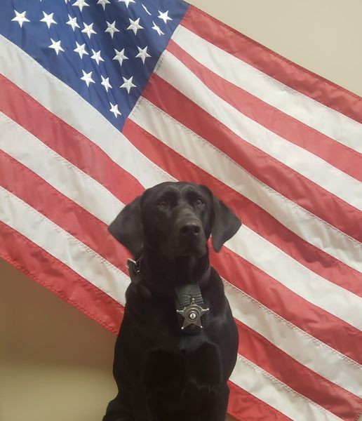 ▲▼ 警犬因公殉職 。(圖/翻攝自Facebook/Staunton City Sheriff`s Office)