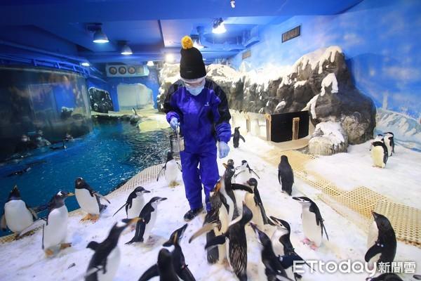 開箱!屏東海生館「餵食企鵝」 100隻企鵝包圍、左右搖擺搶食超萌   E