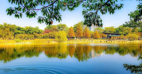 搭捷運賞河畔落羽松!高雄歐風森林公園 漫遊拱橋流水超浪漫