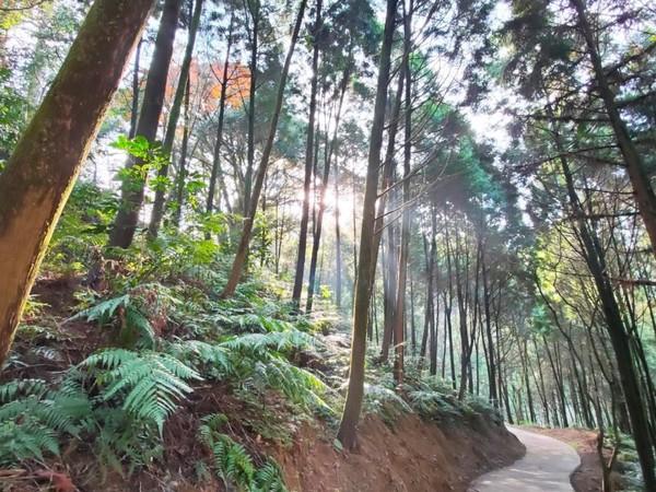 全新森林天空步道將完工!東勢林場三千棵山櫻花2月粉嫩綻放 | ETtod