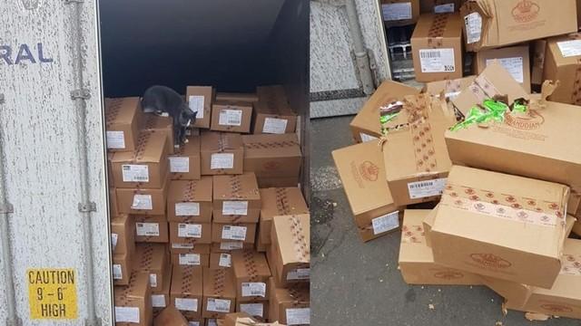▲▼小貓偷渡貨運船,從烏克蘭飄洋2300公里到以色列。(圖/翻攝自Facebook/star.shine.shipping)