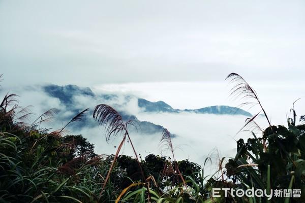 沿著竹林抵雲海、茶園仙境!嘉義「二延平步道」CP值高 | ETtoday