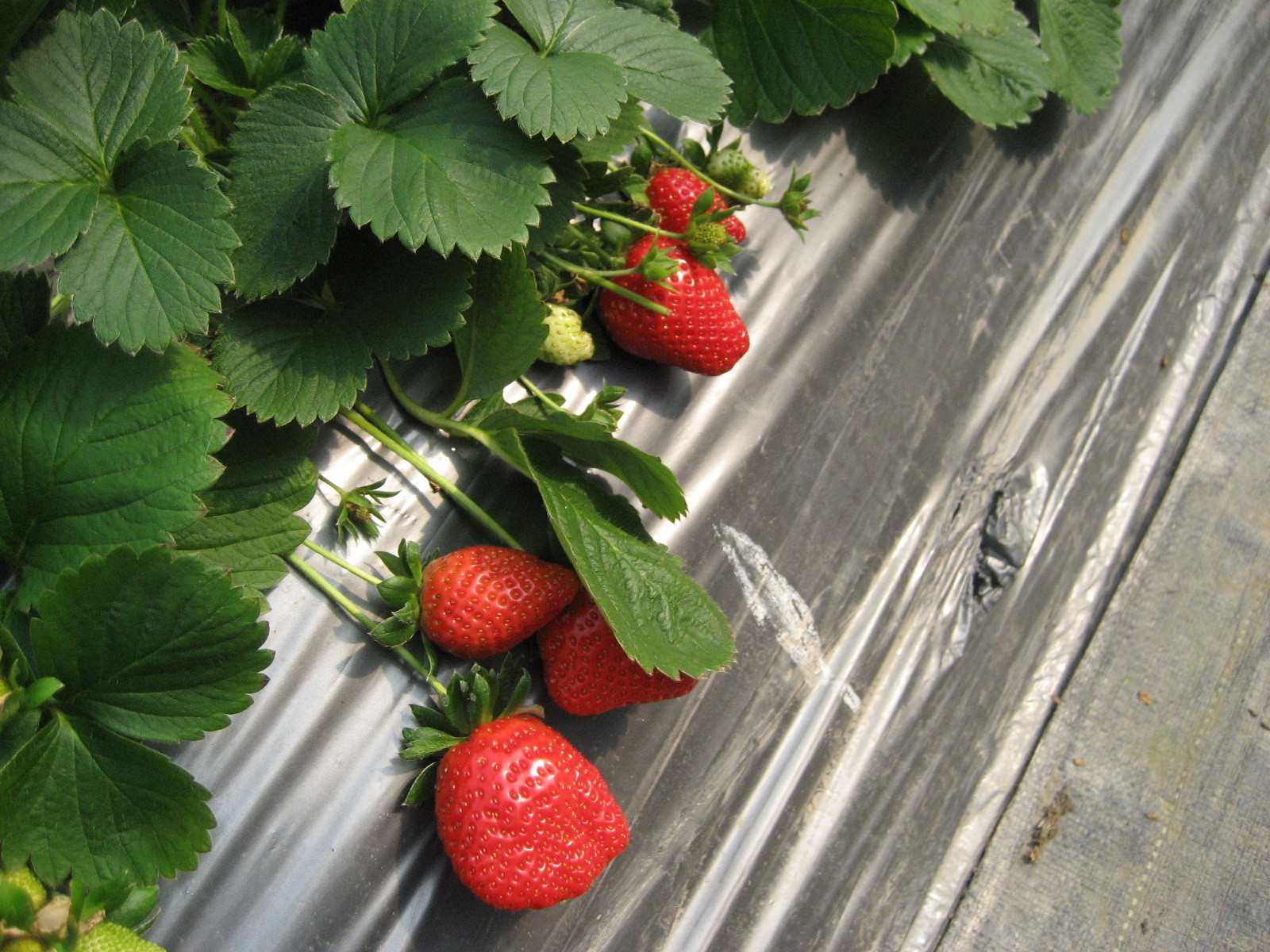 白天採草莓、晚上看夜景!內湖7大景點 免開車也能一日遊
