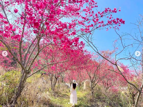 賞櫻不用人擠人!超隱密「粉紅森林」 還藏一間被櫻花包圍的財神廟 | ET