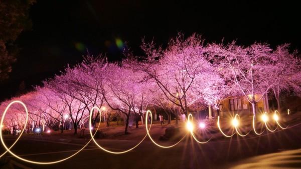 「武陵夜櫻季」登場!2區花況達巔峰 置身粉色浪漫補過情人節 | ETto