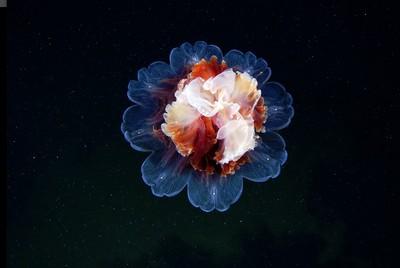 雖然水母很討厭,不過也有漂亮的一面
