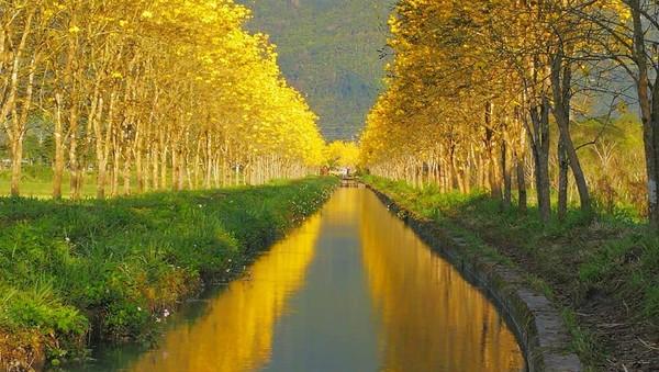 初春泡湯+賞花!花蓮瑞穗小旅行 看300米金色大道、童話城堡睡一晚 |