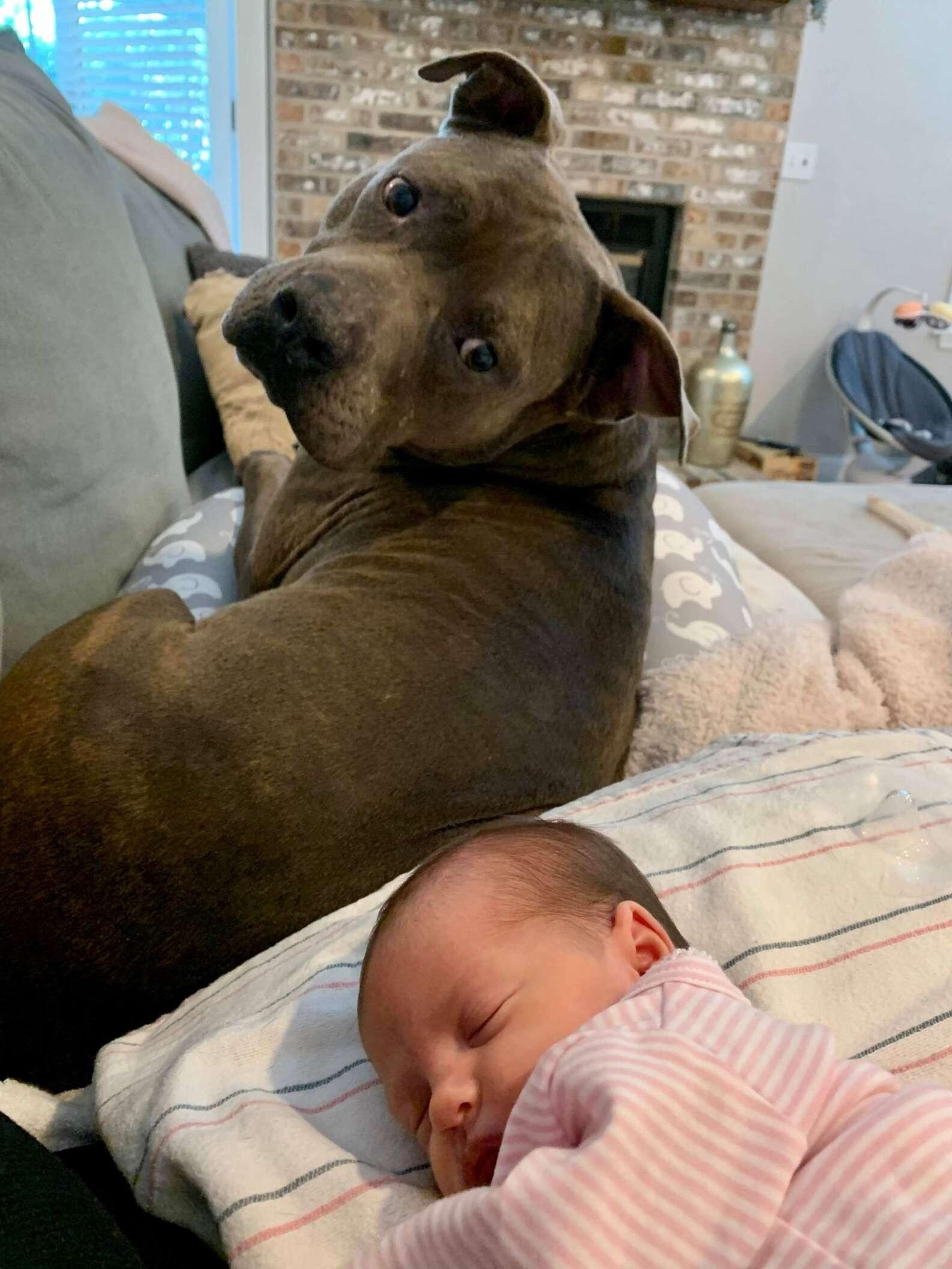 ▲▼塔夫特夫婦與他們的狗狗。(圖/翻攝自Facebook/Liz Graffagnino Taft)