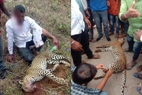 ▲▼印度一名男性赤手空拳成功阻止花豹攻擊妻女。(圖/翻攝自Youtube)