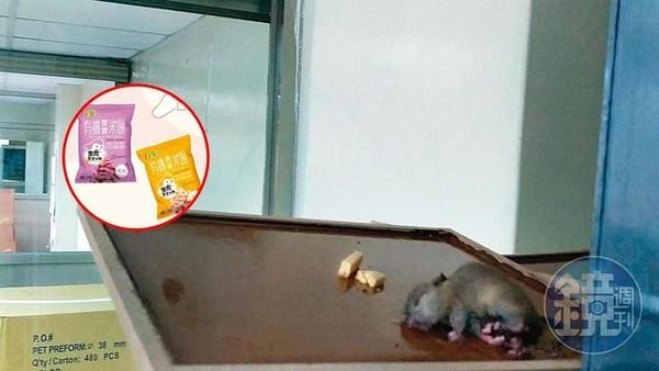 影/知名寶寶米餅「噁心工廠」直擊!蟑螂老鼠滿地爬 工業氮氣包裝