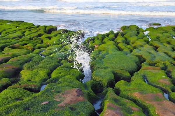 「抹茶地毯」提前綠了頭!老梅綠石槽2公里限定美景現身 | ETtoday