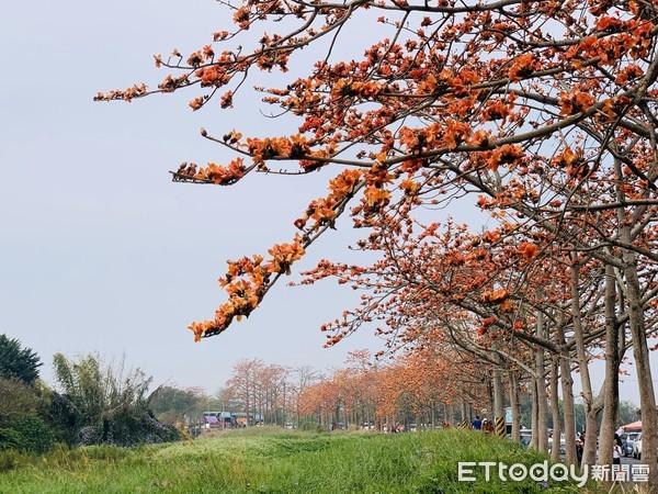 直擊最新花況!台南世界最美花海「林初埤木棉花道」 3月底前都能看