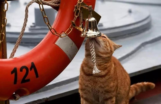 貓,老鼠,潛艦,捕鼠,防鼠板,俄羅斯,艦貓,蘇聯,海軍,茄比級