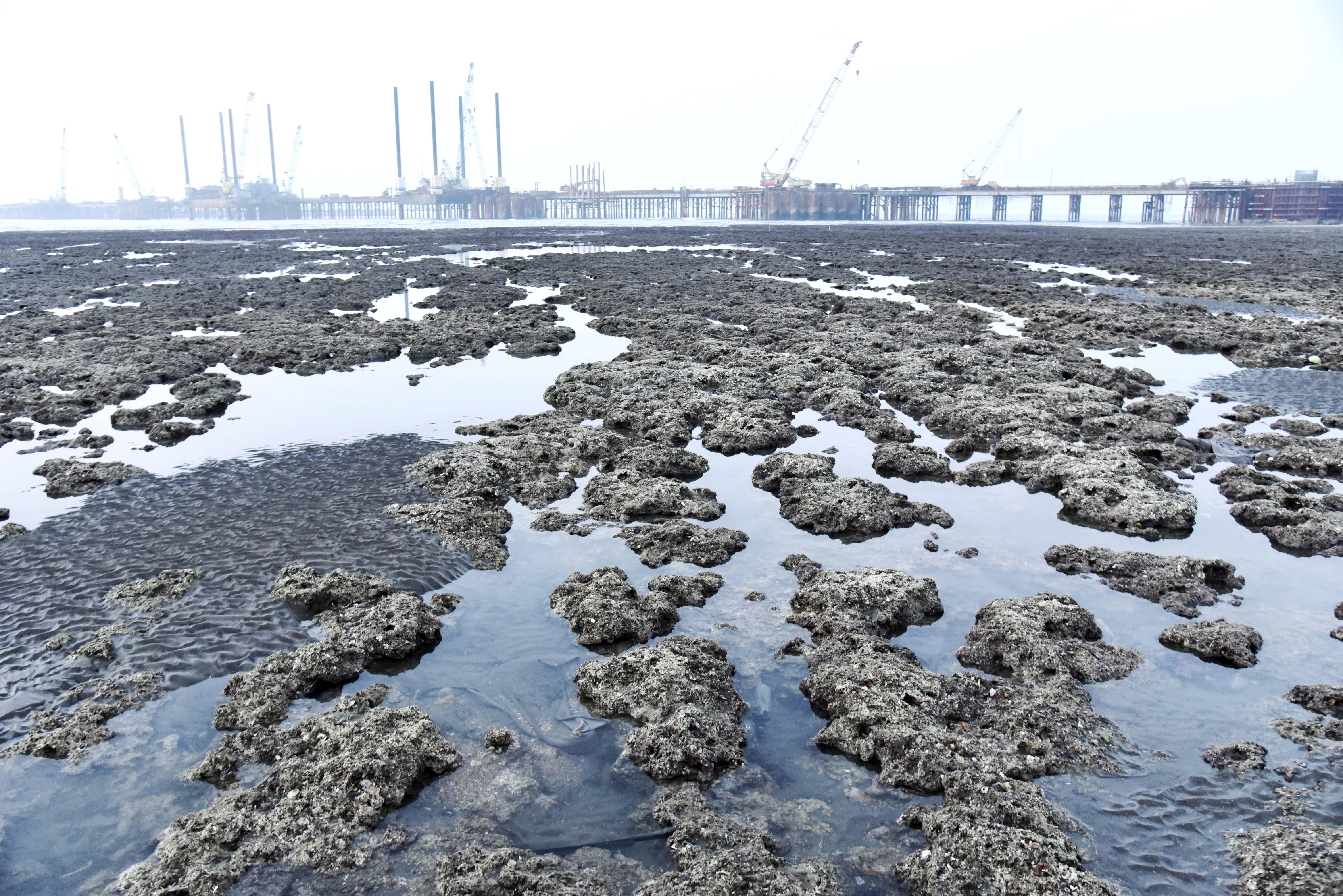藻礁,三接,保育,中油,經濟部,大潭,生態,無核家園,核電,深澳,空汙,綠能,光電,台北港,國民黨,2022,公投,觀塘工業區
