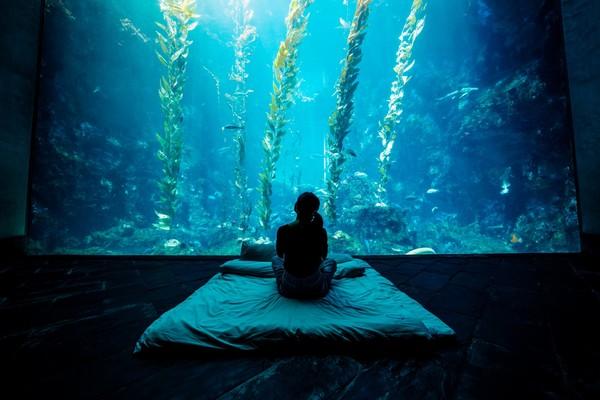 搭獨木舟划進秘境!屏東春夏限定小旅行 海藻森林旁入睡超療癒