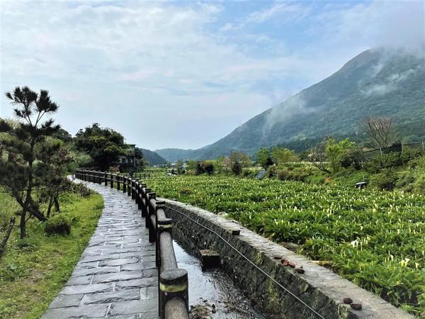 北部2處海芋季登場!竹子湖順遊4處步道、大園變陸上海底樂園 | ETto
