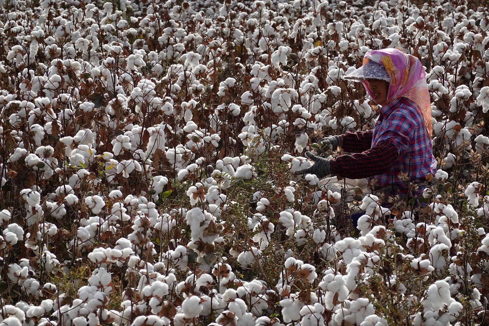 新冷戰,服飾業,新疆,棉花,經濟作物,勞動,品牌,炫耀財,咖啡公義
