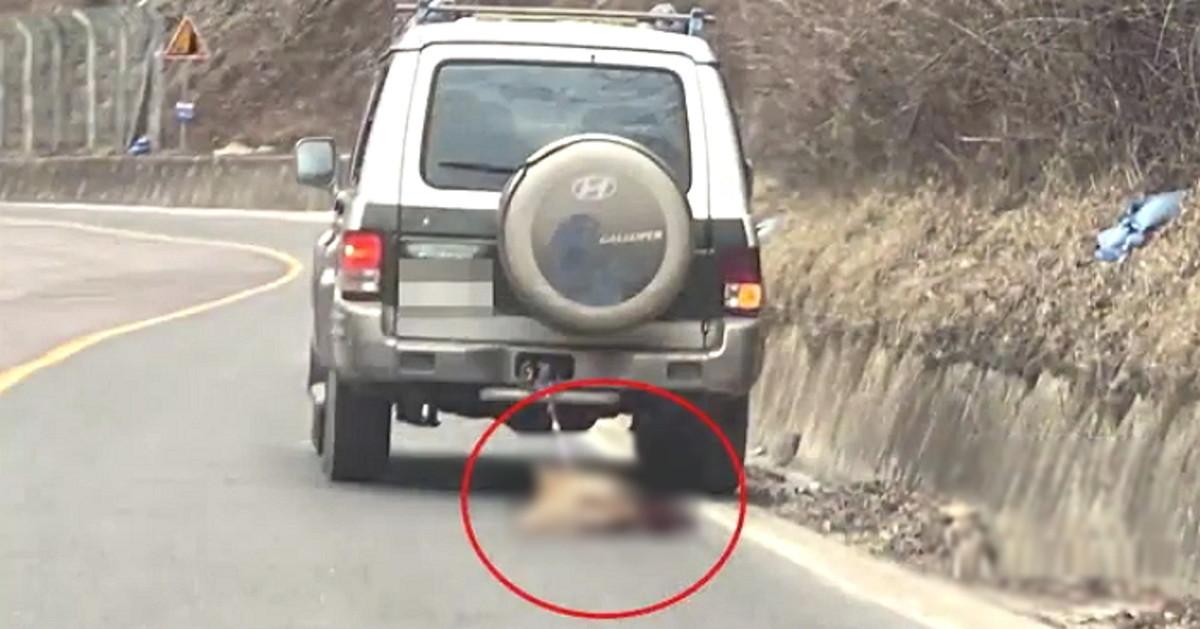 ▲▼南韓裔流浪狗慘被用鐵鍊綁在車後,以時速80公里拖行慘死。(圖/翻攝自Instagram@kawa.hq)